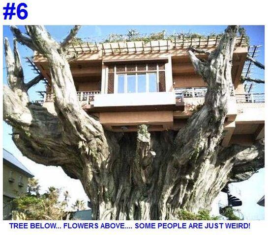 File:-6 a real Tree House.jpg