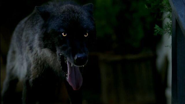 File:Werewolffinale.JPG