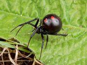 Arachne's spider form look