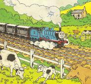 Cows(magazinestory)1