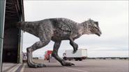 Giganotosaurus-7