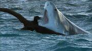 Sharkbatross