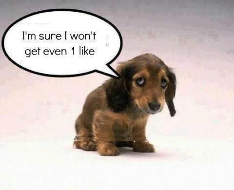 Sad sad puppy