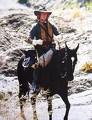 File:92px-459px-Jasper a cavallo.jpg