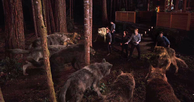 File:Breaking dawn twilight saga part 1 wolf pack vs cullen family final battle.jpg