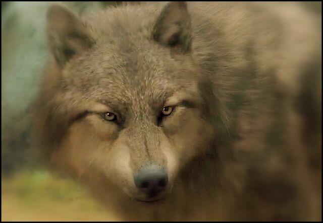 File:Paul wolf in form.jpg