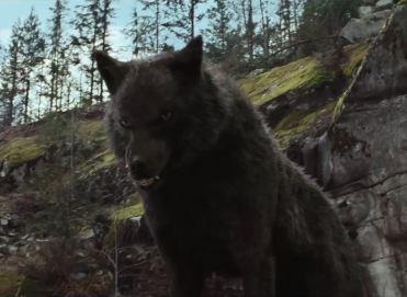 File:Sam's Wolf form.jpg