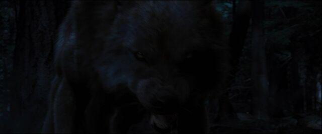 File:Brady-wolf-0020046578.jpg