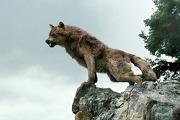 File:180px-Wolfonrocks.jpg