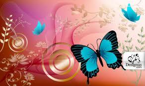 File:Butterfly.jpg