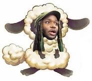 Woolie asdf