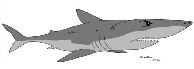 File:Ty shark.jpg