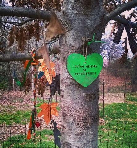 File:Peter Steele Tree.jpg