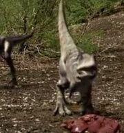 TyrannosaurChicks