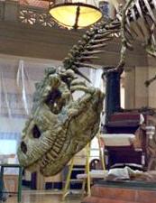 File:Rexy skeleton.png