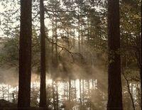 Swamp-mist
