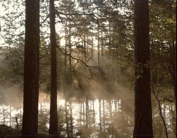 File:Swamp-mist.jpg