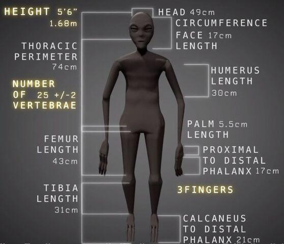File:Maria - Nazca mummy specs.jpg