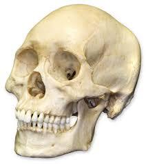 File:Skull boze profile picture.jpg