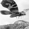 Battle-Mothra