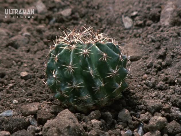 File:Sabotender Cactus Form.png