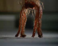 File:Temperorspider.png