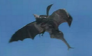 Scorpiss flying - ultra series