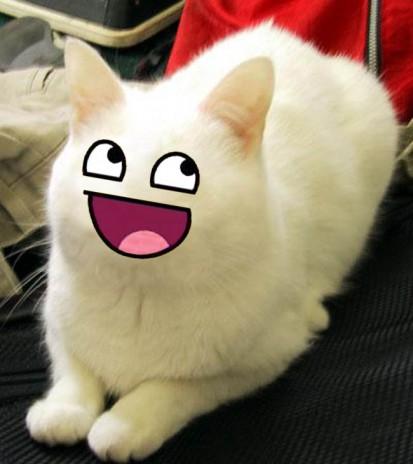 File:Cat funny.jpg