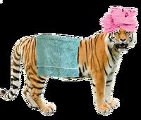 Grft in a bath towel