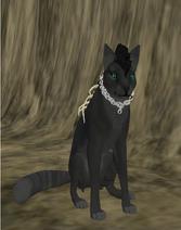 Akina Wolf - Species