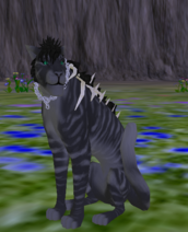 Feline - Species