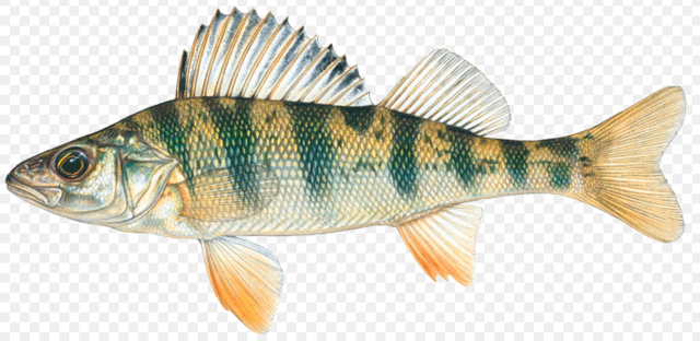 File:Perch.png