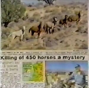 Newspaper article about horse murders