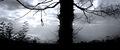 Thumbnail for version as of 08:29, November 14, 2013