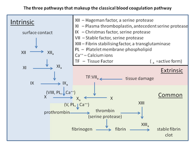 Blood coag pathways