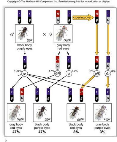 File:Genetics mapunits.jpeg