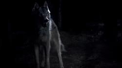 Werewolf1