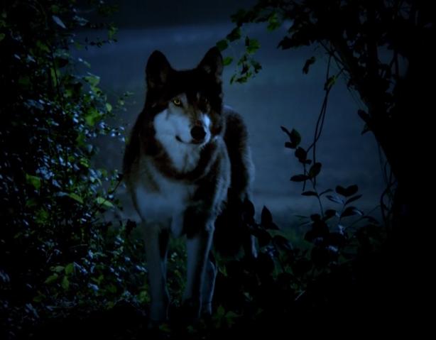 File:Jackson Werewolf Form.png