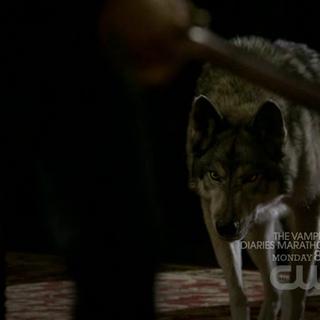 Jules kommt für Damon