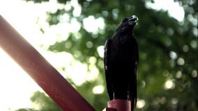105-Crow