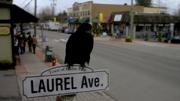 101-Crow-Laurel Ave