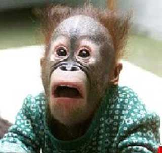 File:Funny-monkey-2.jpg