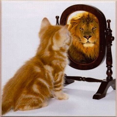 File:Cat-sees-lion-mirror-500x500.jpg