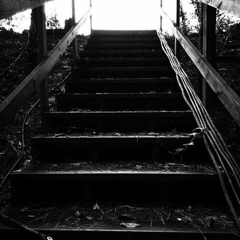 File:Mystic Falls Woods.jpg