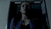 Elena in transition