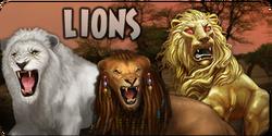 Lions promobox