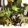Inx Poisonwood Leaves
