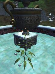 Fountain flower
