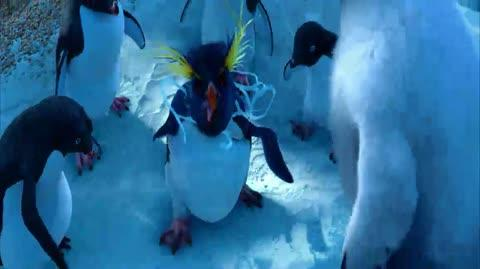 Happy Feet - Lovelace shows the way