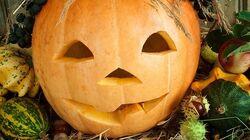 How To Use Halloween Pumpkin Leftovers